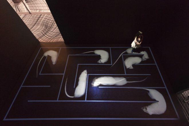Vue de l'exposition « Next », Peter Kogler