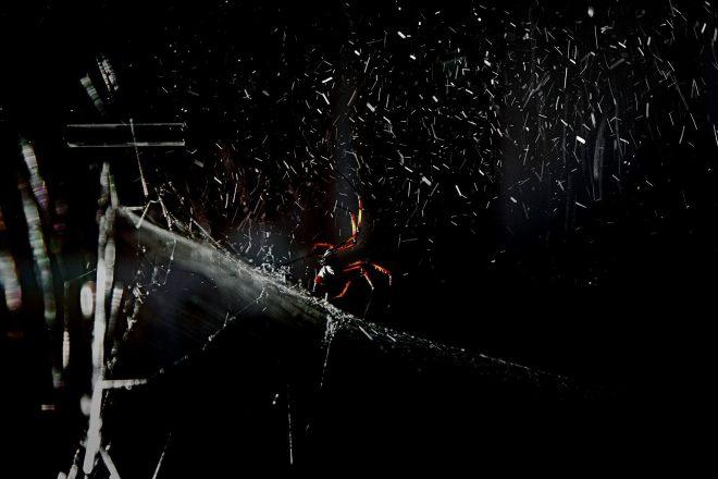 <i>Arachno Concert. Avec araignée (Nephila senegalensis), poussière cosmique et The Breathing Ensemble</i>, Tomás Saraceno, 2016