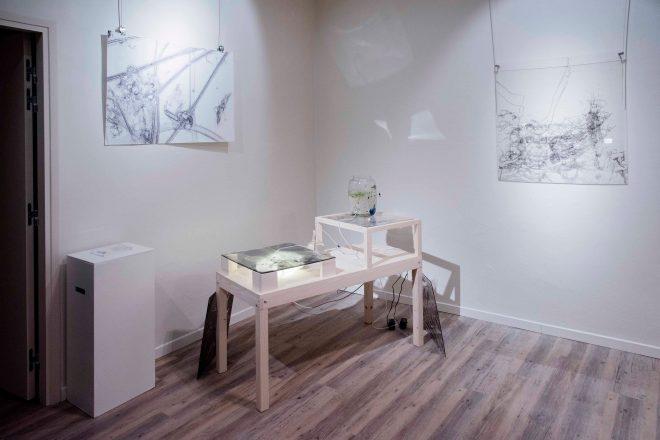 Vue de l'exposition « Un coup de gènes jamais n'abolira le hasard », Iglika Christova et Paula Fontanilla