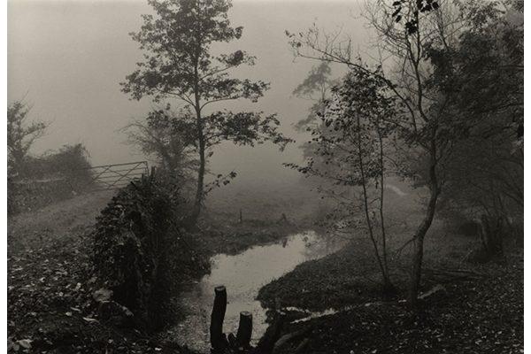 « Woods near My House, Somerset », Don McCullin, 1991