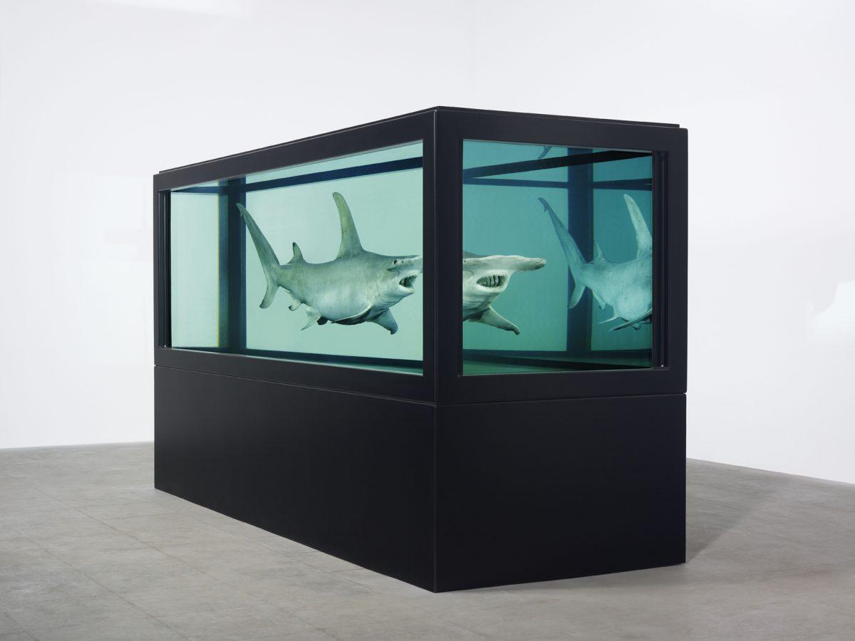 Damien Hirst, photo Prudence Cuming Associates courtesy Musée océanographique de Monaco