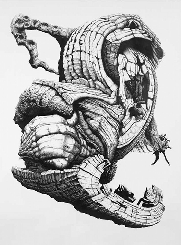 Starling, crayon sur papier (220 x 165 cm)