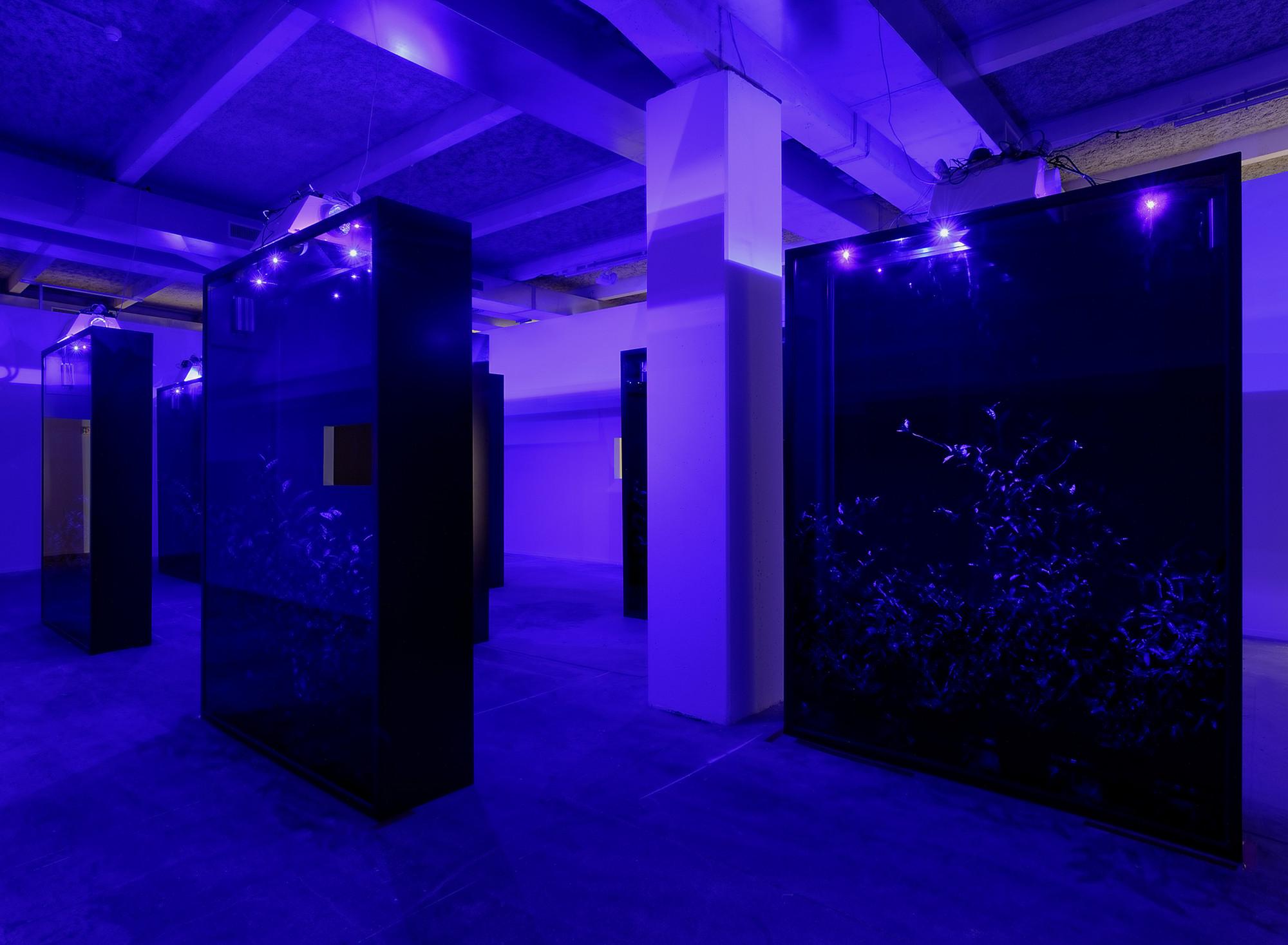 Hicham Berrada, photo Blaise Adilon, courtesy  Kamel Mennour et Biennale de Lyon