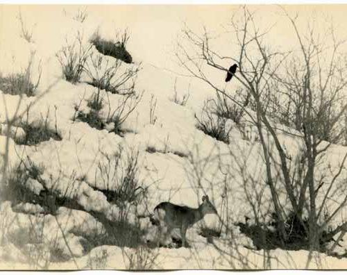 Masao Yamamoto courtesy Fifty One Fine Art gallery